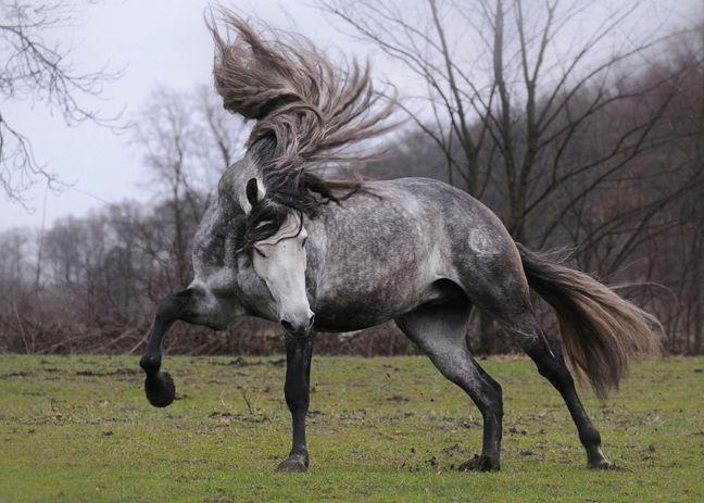 Horse - Sorrow